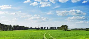 Rural spring field Stock Photo
