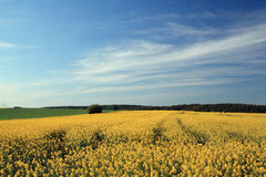 Rural spring landscape. Rural landscape near bad arolsen, hesse, germany stock photography