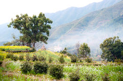 Rural spring scene(China Wuyuan) Stock Image