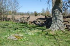 Rural springtime Stock Image
