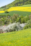Rural springtime scenery. Sunny illuminated idyllic rural springtime scenery in Hohenlohe, a district in Southern Germany Stock Images