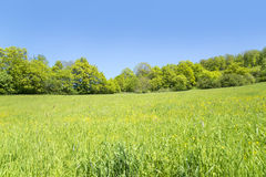 Rural springtime scenery Stock Photography