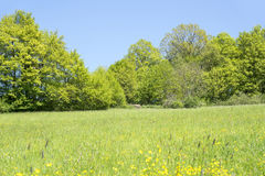 Rural springtime scenery. Sunny illuminated idyllic rural springtime scenery in Hohenlohe, a district in Southern Germany Royalty Free Stock Photography