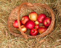 Rural still-life Royalty Free Stock Photo