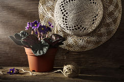 Rural still life with pansy Royalty Free Stock Images