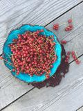 Rural still life: red currant berry in a blue plate on a gray wooden  background Royalty Free Stock Photos