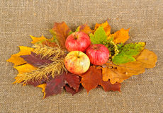 Rural style life. Ripe apples and dried leafs on canvas background Stock Images