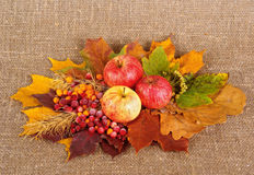 Rural style life a. Ripe apples, frozen berrys and dried leafs on canvas background Royalty Free Stock Photo