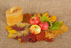 Rural style life b. Ripe apples, birch barc box and dried leafs on canvas background Royalty Free Stock Images