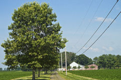 Rural Summer Landscape Royalty Free Stock Photography