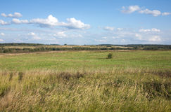 Rural summer landscape with field and forest on skyline Stock Photo