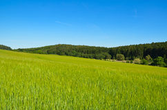 Rural summer landscape with field and forest on skyline Royalty Free Stock Photos