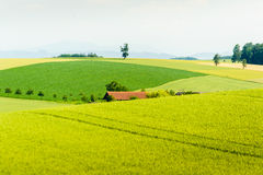 Rural summer landscape Royalty Free Stock Photo