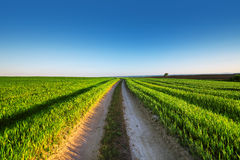 Rural summer landscape with green grass, curved dirt road Stock Images