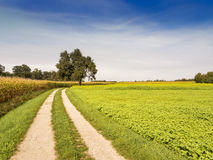 Rural summer landscape with green grass, road and blue sky Stock Photos