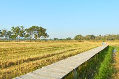 Rural summer landscape,the green and yellow agricultural field with Blue Sky, Wood bridge over the field. Copy space for text Stock Photos