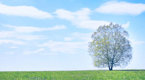 Rural summer landscape with lonely tree Royalty Free Stock Images