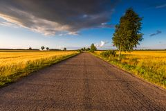 Rural summer landscape with old asphalt road Stock Images