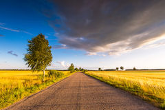 Rural summer landscape with old asphalt road Stock Photo