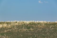 Rural summer landscape. Stubble field with a blue sky in the summer Stock Image