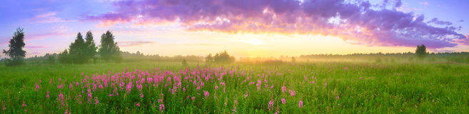 Rural summer landscape with sunrise. A blossoming meadow and fog. panorama Stock Photo