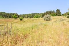Rural summer landscape Royalty Free Stock Photo