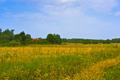 Rural summer landscape. Typical european pastoral meadow, pasture, field. Illustration of agriculture Stock Photography