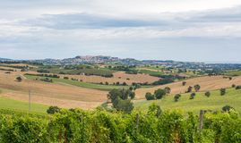 Rural Summer Landscape With Sunflower Fields, Vineyards And Olive Fields Near Porto Recanati In The Marche Region, Italy Stock Image
