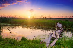 Rural summer sunrise Stock Photos