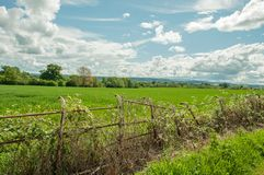 Summertime landscape and a craggy old fence in the British countryside. A rural summertime landscape scene with clouds and blue skies and crops by a craggy old stock image
