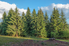 Rural sunny landscape with forest Royalty Free Stock Image