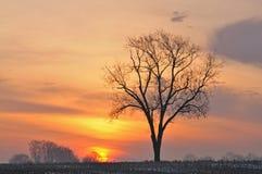 Rural Sunrise Royalty Free Stock Image