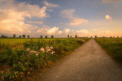 Rural Sunrise. Wild flowers in the Boterhuispolder, Leiderdorp, The Netherlands Stock Image