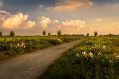 Rural Sunrise. Wild flowers in the Boterhuispolder, Leiderdorp, The Netherlands Royalty Free Stock Photos