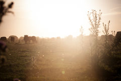 Rural Sunset. Sunset in Buenos Aires, Rural Royalty Free Stock Images