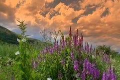 Rural sunset nature Stock Photo