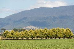 Rural Tasmania Stock Image