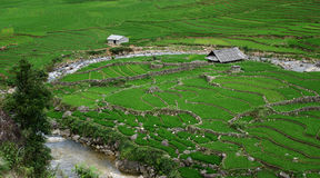 Rural terraced maze Stock Images
