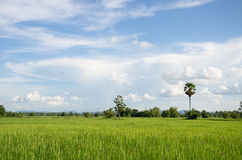 Rural of thailand Royalty Free Stock Photo