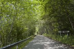 Rural Tourism in Spain. Cotomonteros Village, Spain. Avenue of trees stock images