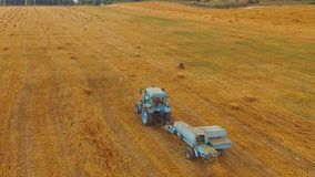 Rural Tractor Making Hay Bales In Stubble Field. This is an aerial rear shot over golden stubble field with a light blue farm tractor while collecting hay and stock video footage