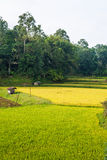 Rural traditional village in idyllic landscape, Sulawesi, Indonesia Royalty Free Stock Photography