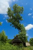 Rural tree Royalty Free Stock Photography