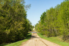 Rural tree lined road Royalty Free Stock Photos