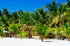 Rural tropical white sand beach with coconut palms Royalty Free Stock Image