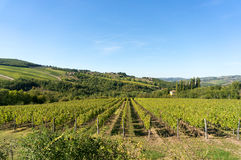 Rural Tuscany landscape of vineyards and green hills Royalty Free Stock Photos