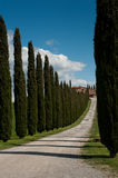 Rural Tuscany. WS - Rural Tuscany Italy landscapes wine vineyards olive groves green and  blue conifer cypress trees Stock Photo