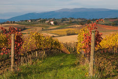 Rural Umbria Hills With Autumn Vineyard Stock Photo
