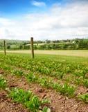 Rural Vegetable Plot stock image