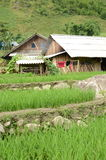 Rural Vietnam Stock Images